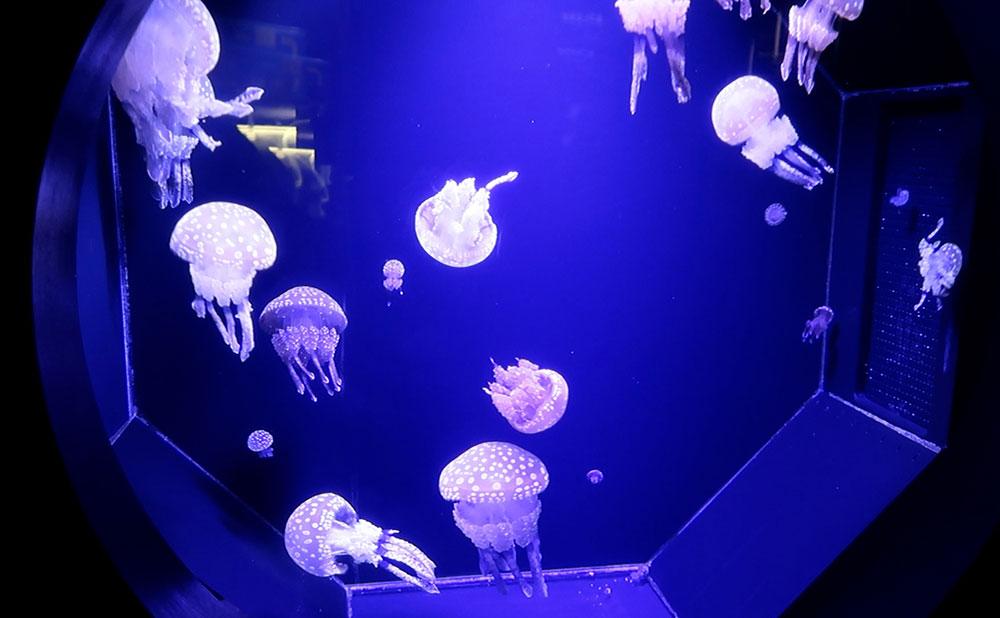 下田海中水族館 クラゲ