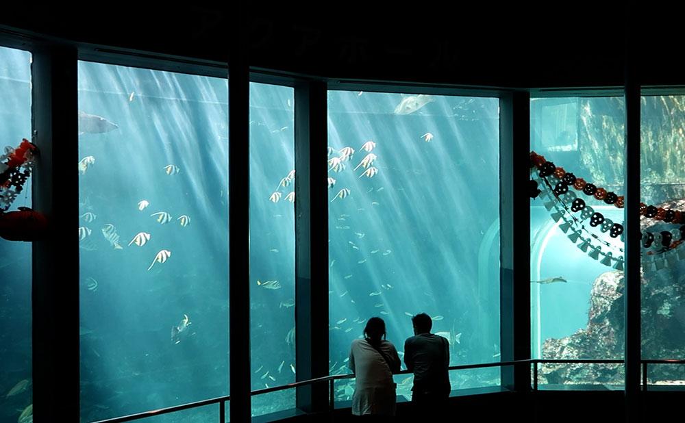 下田海中水族館 水槽